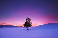 北海道 「春よ来い」の一本の木の朝