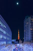 東京都 イルミネーション六本木けやき坂と満月