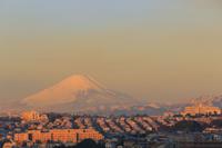 神奈川県 朝日に染まる富士山と住宅街