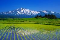 秋田県 田園と鳥海山