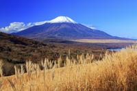 山梨県 三国峠よりススキ野原と富士山