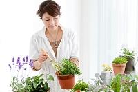 植物を植えている日本人女性