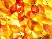 沢山の落ち葉