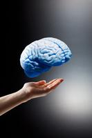 手の上に浮いた模型の脳