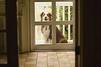 外から家の中を見つめる犬