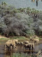 サンブール国立保護区 水浴びをする象
