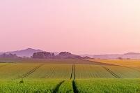 北海道 朝もやたなびく小麦畑の丘