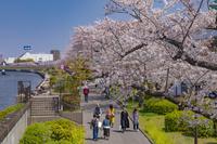 東京都 桜咲く隅田川