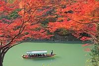 京都府 嵐山の保津川の船下りと紅葉