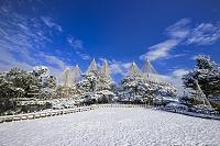 石川県 雪の兼六園雪吊り