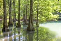 日本 新緑の篠栗九大の森