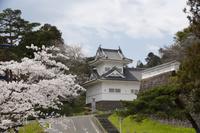 宮城県 青葉城隅櫓と桜