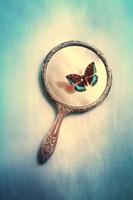 虫眼鏡と蝶