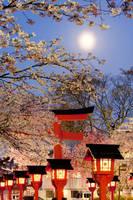 京都府 平野神社の夜桜と月