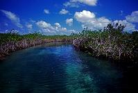 メキシコ シアン・カアン生物圏保護区