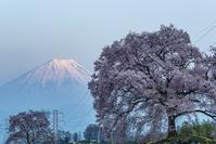 山梨県 わに塚の桜