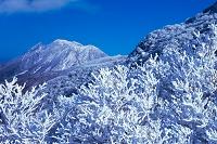 大分県 牧ノ戸峠霧氷と三俣山 沓掛山