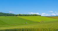 北海道 新星の丘