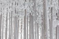 奈良県 台高山脈・明神平付近の霧氷