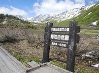 長野県 小谷村 栂池自然園 水芭蕉と白馬連峰