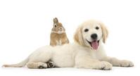 うさぎと犬