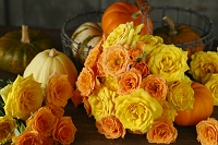 イエローとオレンジのバラ