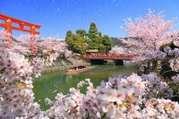 京都府 岡崎疎水の桜並木と平安神宮の大鳥居とと十石舟めぐり