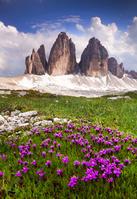 イタリア ドロミテ 花