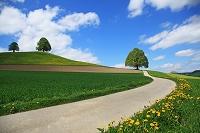 スイス ベルン州 草原に一本の道