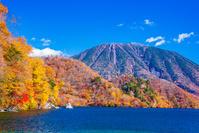 栃木県 日光市 奥日光 紅葉する中禅寺湖の千手ヶ浜と男体山