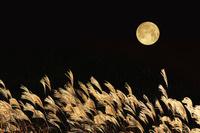 秋 満月とススキ