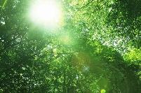 原生林と木漏れ日