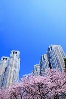 東京都 新宿区 桜と都庁