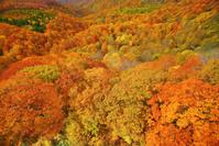 青森県 城ヶ倉大橋から望む城ヶ倉渓谷の紅葉