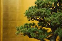 金屏風と盆栽