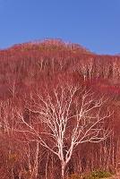 秋田県 白神山地