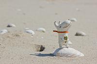砂浜の貝殻の上に座る森ビトのリリィ
