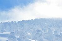 山形県 山形蔵王の樹氷
