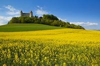 スイス 菜の花畑