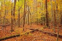 大分県 黒岳 紅葉の原生林
