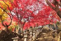 神奈川県 丹沢大山の紅葉