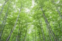 北海道  弟子屈町 新緑の林