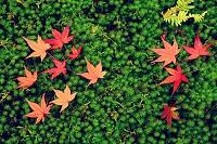 日本 紅葉