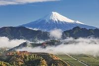 静岡県 富士山 吉原より