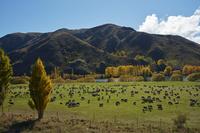 ニュージーランド  オタゴ地方