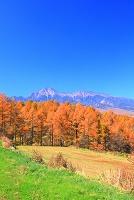 長野県 南牧町・野辺山高原 カラマツ並木と八ヶ岳