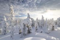 フィンランド 冬の森