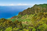 ハワイ カウアイ島 カララウ渓谷
