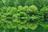 長野県 上田市 新緑が映り込む竜ヶ沢ダム
