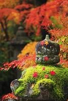 京都府 石灯籠に散った紅葉